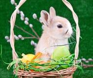 Oeufs et lapin de pâques Photo libre de droits