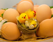 Oeufs et nanas de poulet Image libre de droits