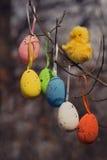 Oeufs et poulet colorés par Pâques décoratifs image libre de droits