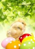 Oeufs et poulets de pâques images libres de droits