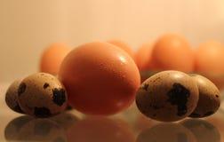 Oeufs frais de poulet et de caille prêts à cuisiner Images libres de droits