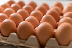 Oeufs frais de 123/5000 poulet sur un fond blanc Image libre de droits