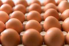 Oeufs frais de 123/5000 poulet sur un fond blanc Photos libres de droits