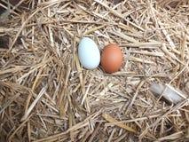 Oeufs frais de poulets dans le nid images libres de droits