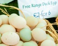 Oeufs gratuits de canard de gamme Photographie stock