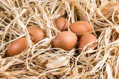 Oeufs organiques de brun frais de poulet sur la paille Photographie stock libre de droits