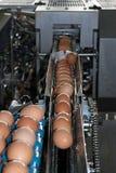 Oeufs placés sur la ligne de transmission Photo libre de droits