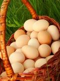 Oeufs, poulet dans un panier en osier Photo libre de droits
