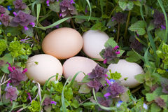 Oeufs sur l'herbe Photo stock