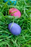 Oeufs violets et roses dans l'herbe Image libre de droits