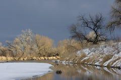 Oever bos langs een rivier in de prairies van Colorado Royalty-vrije Stock Foto's