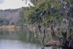 Oever in Kathryn Abbey Hanna Park, Duval-Provincie, Jacksonville, Florida stock foto's