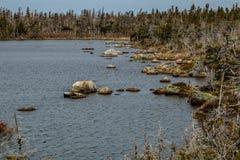 Oever rond Berryhill-Vijver, Gros Morne National Park, Newfo royalty-vrije stock fotografie