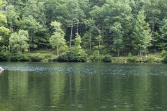 Oever van het meer stock afbeelding