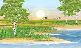 Oever van het meer, berkbosje en weide Twee koeien eten gras stock illustratie