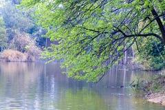 Oever van het meer boom-Nan-Tchang Mei Lake Scenic Area Royalty-vrije Stock Foto