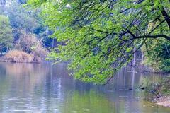Oever van het meer boom-Nan-Tchang Mei Lake Scenic Area Stock Foto's