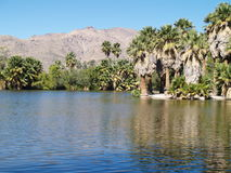 Oever van het meer in de woestijn van Arizona royalty-vrije stock fotografie