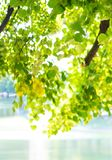 Oever van het meer groene bomen in sunlights royalty-vrije stock foto's