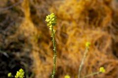 Oever van het meerca Bloemen stock afbeelding