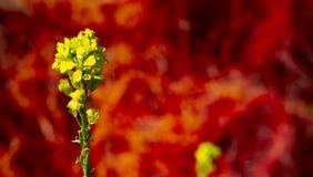 Oever van het meerca Bloemen stock fotografie