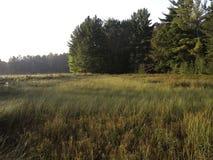 Oever van het meermoerasland Royalty-vrije Stock Afbeeldingen