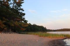Oever van meer in de zomer tijdens zonsondergang stock foto's