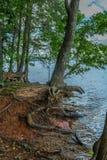 Oevererosie bij het meer stock afbeelding
