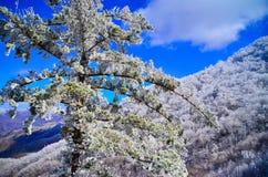 Oezbekistan, Chimgan-gebied, de lente van 2006 Stock Afbeelding