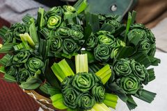 Ofício fresco verde da flor de Pandan Foto de Stock