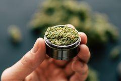 Free Of Flowers Of Cannabis And Scales And Joint Top View In Hand A Grinder To Grind Marijuana Weed Against A Background Royalty Free Stock Photo - 118418795
