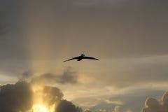 ofantligheten av himlen skrämmer inte mitt flyg i denna biosfär Royaltyfri Foto