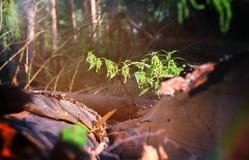 Ofenda contra un bosque verde hermoso, en verano, un viajero imagen de archivo libre de regalías