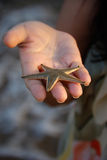 Oferta dos Starfish Foto de Stock Royalty Free