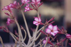 Oferta kwiaty Zdjęcia Royalty Free