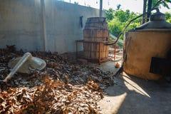 Oferta liście cynamon (Cinnamomum zeylanicum) Fabryczna plantacja cynamonowi drzewa i krzaki Zdjęcia Stock