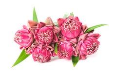 Ofertas cor-de-rosa budistas de Lotus Flower aos deuses Fotografia de Stock
