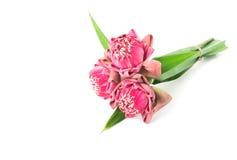 Ofertas cor-de-rosa budistas de Lotus Flower aos deuses, foco seletivo Imagem de Stock Royalty Free
