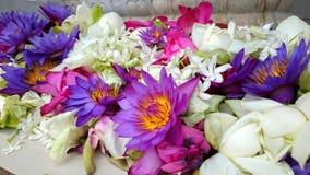 Ofertas da flor em um templo budista Imagens de Stock