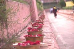 Ofertas da pétala de Rosa no bodhgaya Fotos de Stock Royalty Free