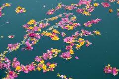 Ofertas florais coloridas, pétalas, flores e festões, flutuando no lago Pushkar, Índia Foto de Stock