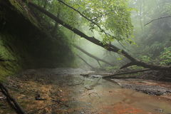 Off into the Mist. Starved rock state park, early morning after a long rain Stock Photography