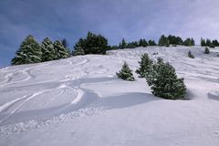 Off-piste skiing: traces in the snow. A landscape of the French Alps covered with traces of skiing in white snow. There are a few fir trees. The day is sunny Stock Image