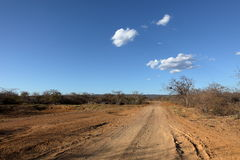 Off Road in the Caatinga of Brazil Stock Photo