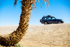 Off road car in front of palm in Morocco. View on off road car in front of palm in Morocco Stock Image