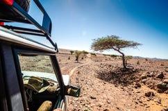 Off road car going through savanna in moroccan hamada desert Erg Chigaga near Four Zguid with acacia trees. Off road car going through savanna in moroccan hamada stock image