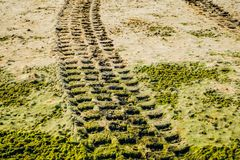 Off road car tyre track on sandy beach. With algae Royalty Free Stock Photo