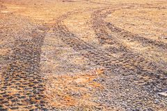 Off road car tyre track on sandy beach with algae. Close view Stock Photography