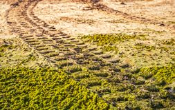 Off road car tyre track on sandy beach with algae. Close view Stock Photo