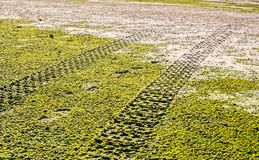 Off road car tyre track on sandy beach with algae. Close view Royalty Free Stock Photography